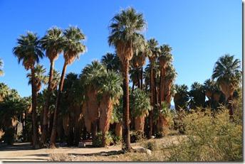 palmsprings025